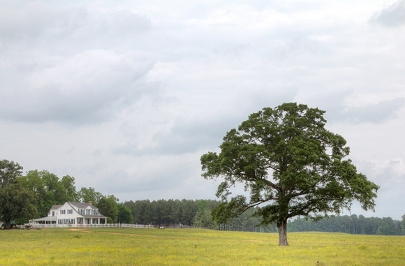 Farmhouse and Tree in Rural Montgomery County, Alabama