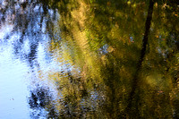 Sipsey River Reflection II