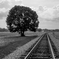The Railroad runs alongside a Red Oak near Phil Campbell, Alabama